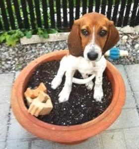 puppy-training-ottawa
