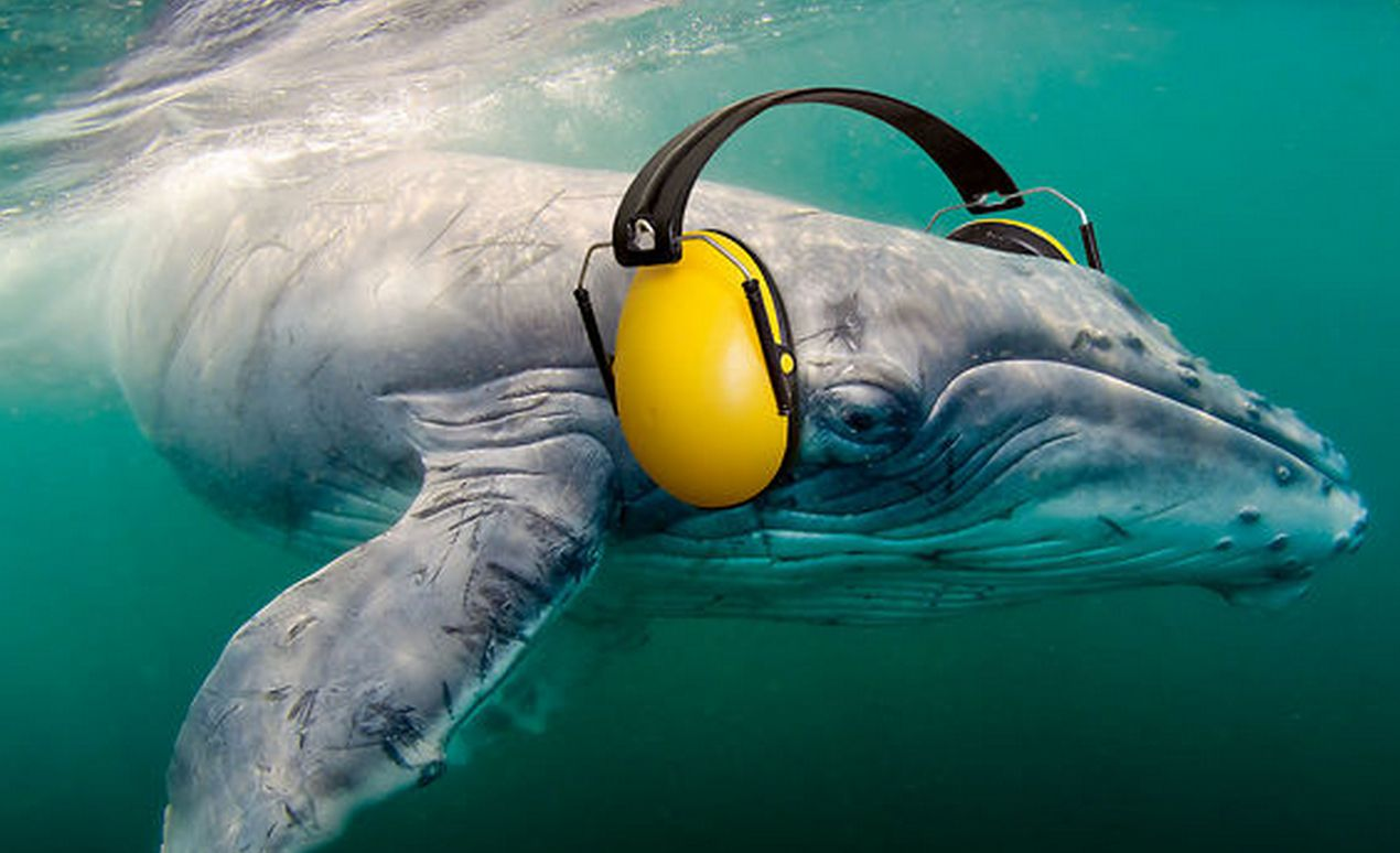 Ocean Noise Pollution Harms Marine Life From The Smallest