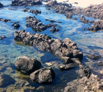 Makapu'u Tide Pools