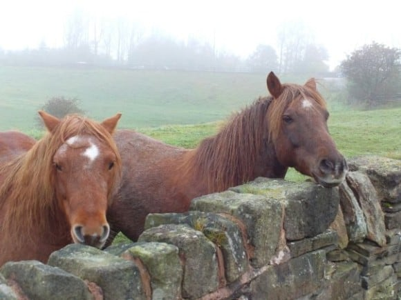 Even British horses are cool...