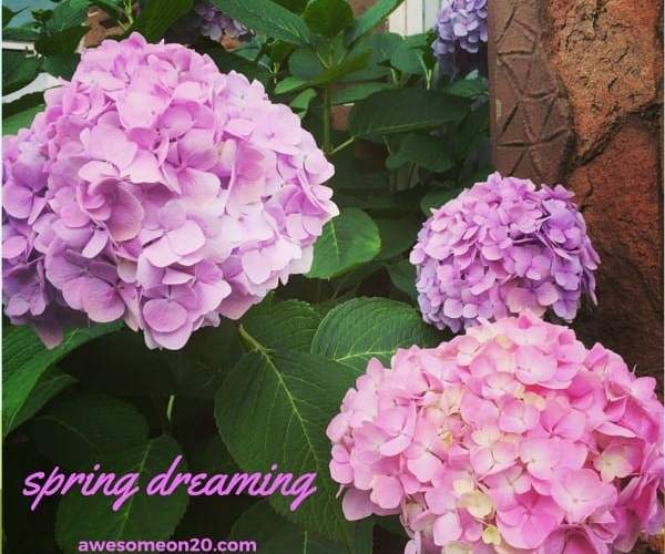 Spring Dreaming | How to be Awesome on $20 a Day