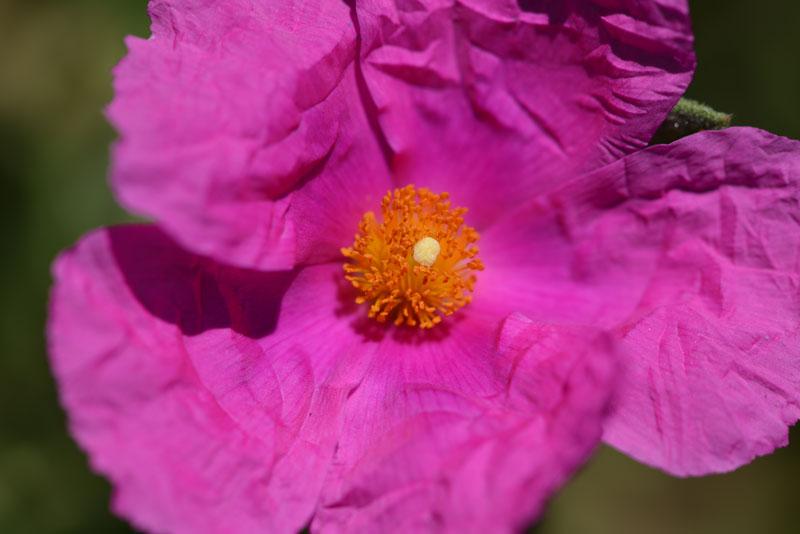 flower_6962