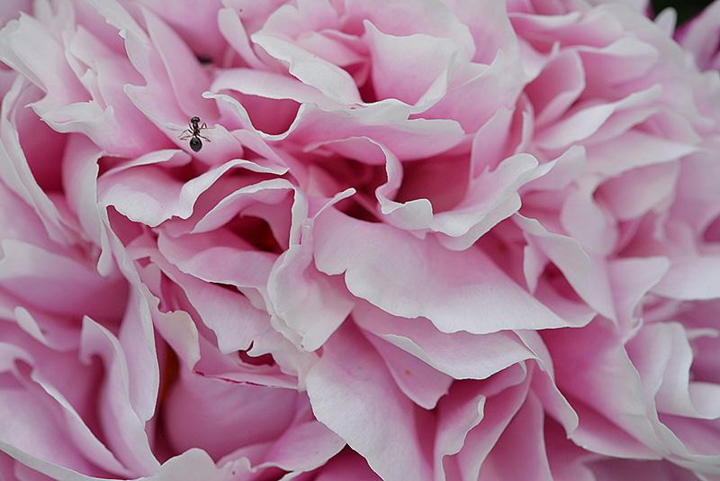 flower_8068