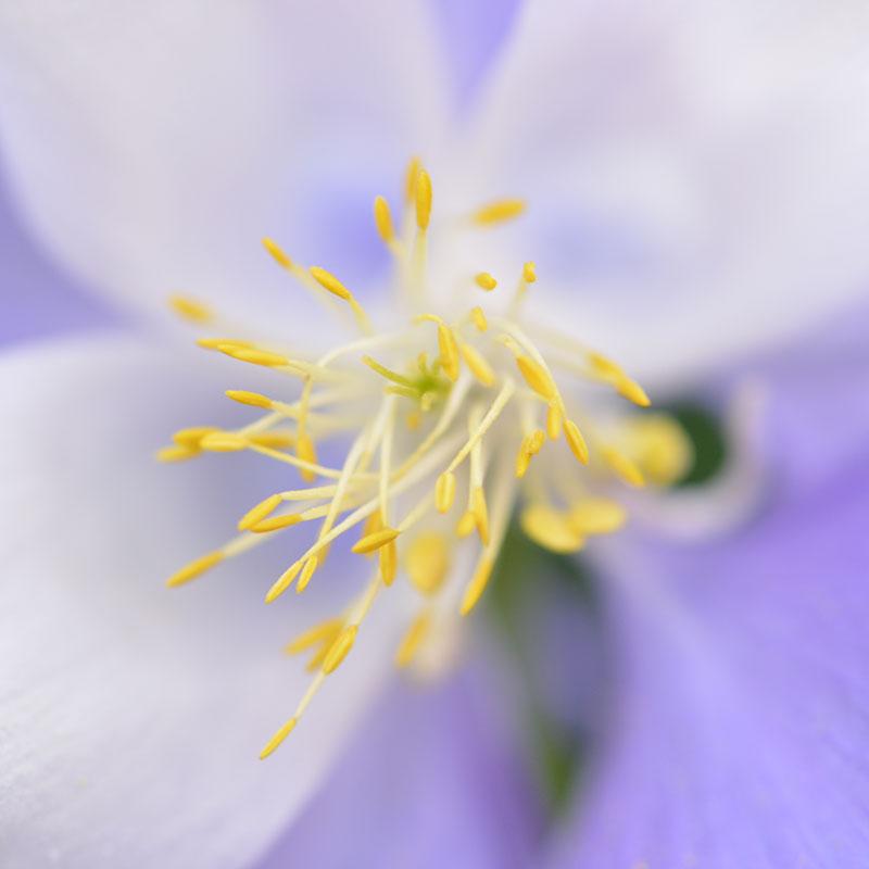 flower_8081