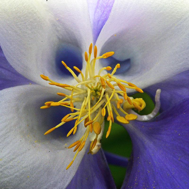flower_8082