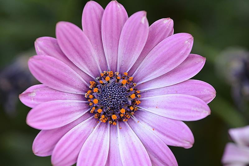flower_8102