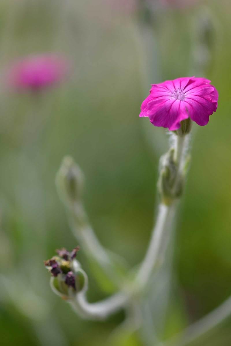 pink-flower_9521