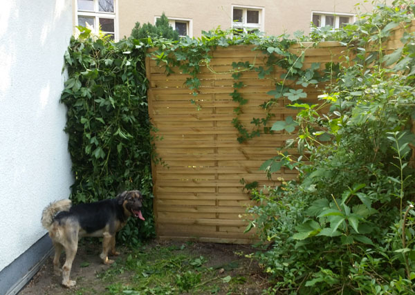 DIY Privacy screen