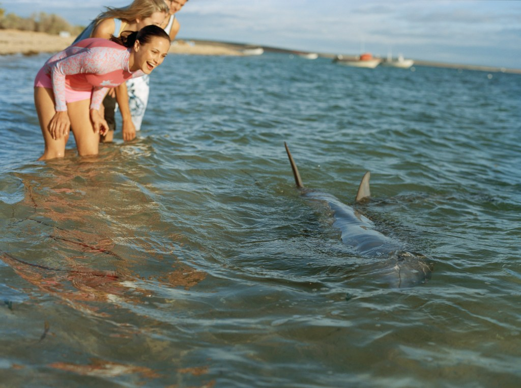Dolphins at Monkey Mia. Credit Tourism Australia