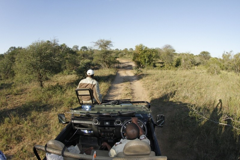 Game Drive at Umlani Bushcamp, Timbavati Private Nature Reserve, GKNP