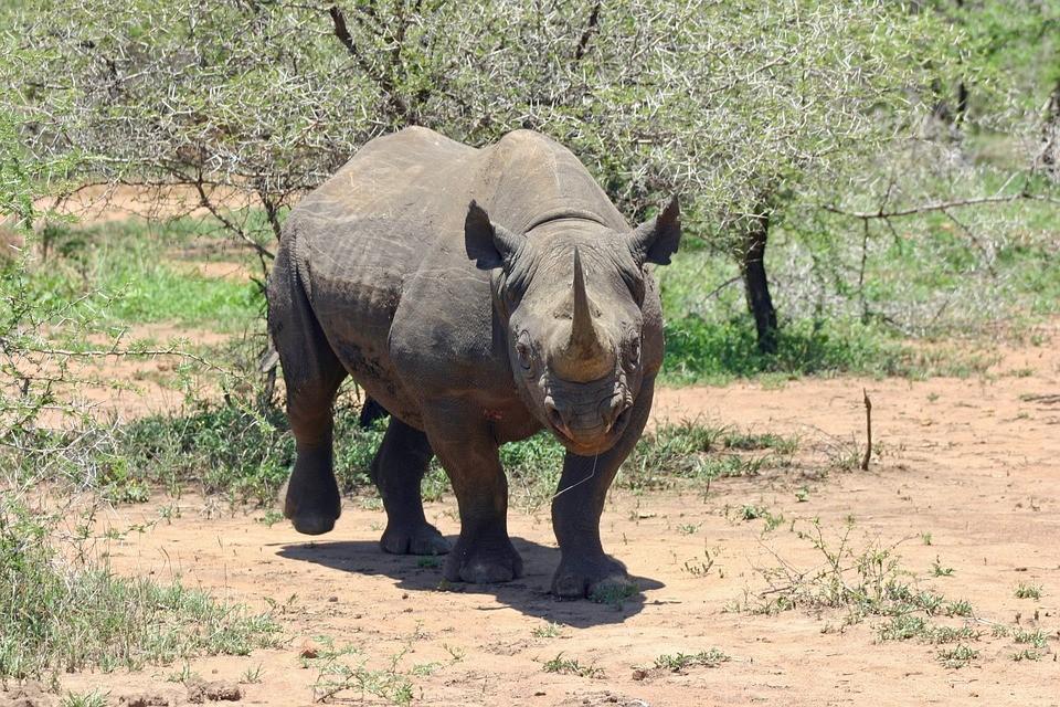 Spotting Rhino on Safari in South Africa