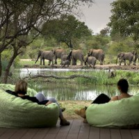 South Africa's Best Wildlife Region