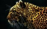 Animals (2)