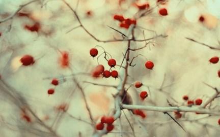 Wild Berries 1920x1200