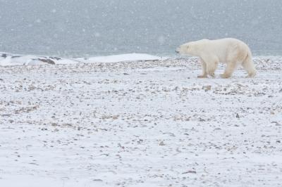 polar bear, when you feel alone at church