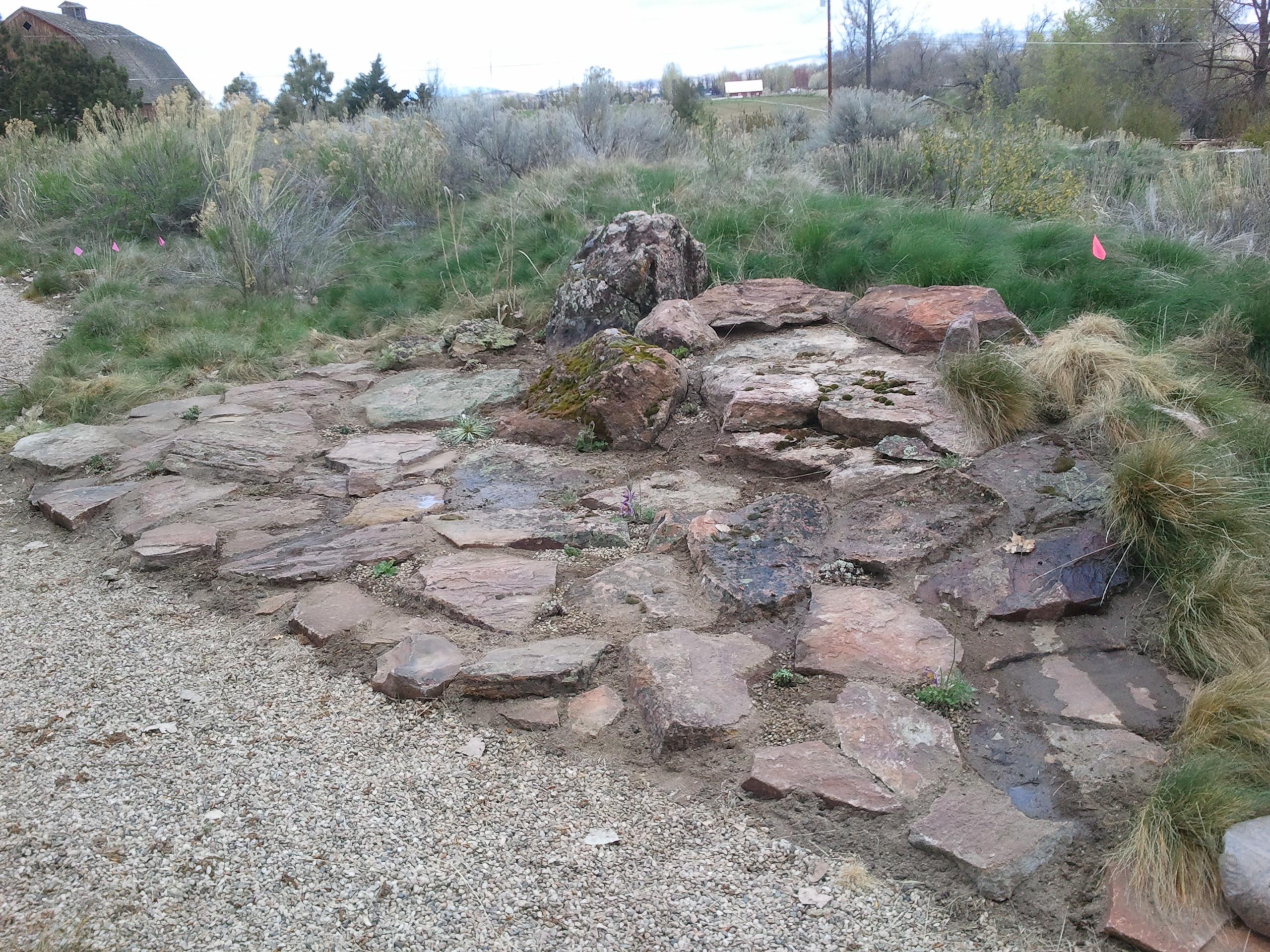 April 2013 - awkward botany on Backyard Rocks  id=49264