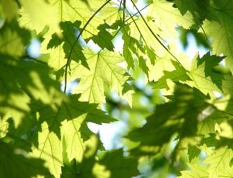 Ecosia: de groene zoekmachine