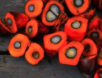 De lelijke waarheid achter palmolie