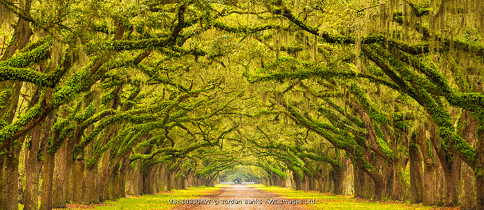 USA, Georgia, Savannah, Entrance to Wormsloe Plantation