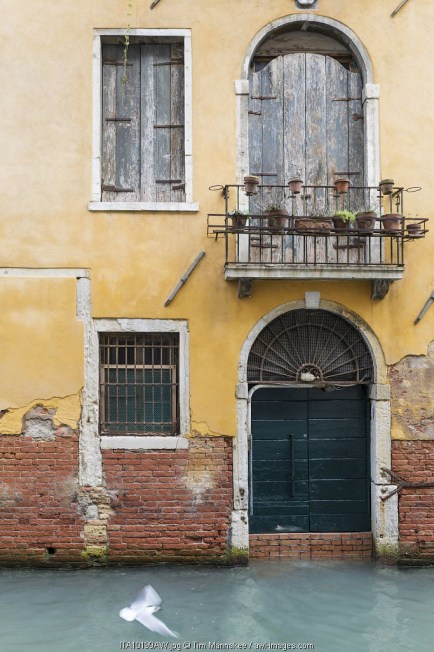 Pigeon flies past old building on canal, Venice, Veneto, Italy