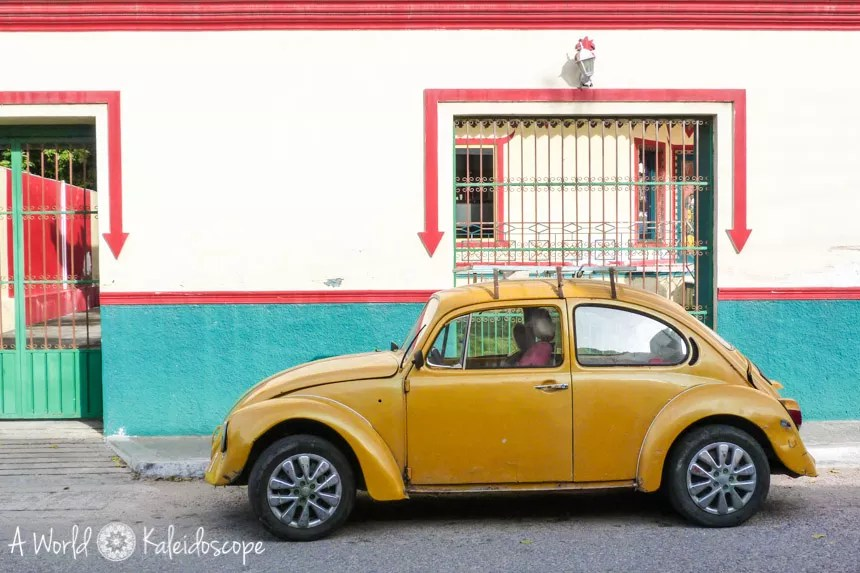 mexico-yucatan-yellow-beetle