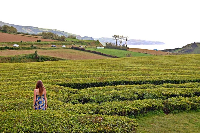 Europe's only tea plantation