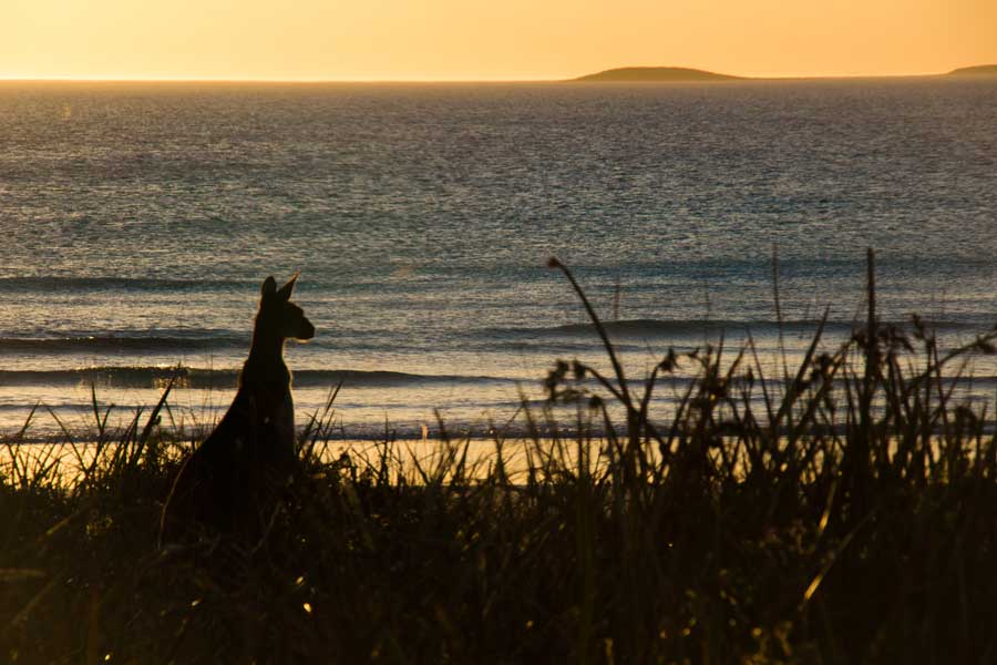 Solnedgang ved Cape Le Grand Beach