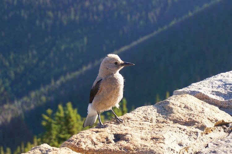 Colorado Photo Diary_16
