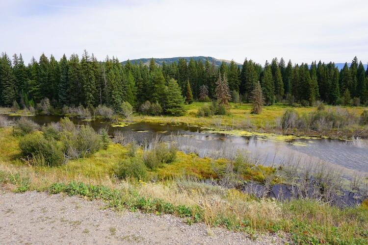 Yellowstone National Park Photo Diary 14