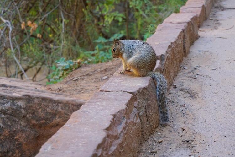 Zion National Park_Photo Diary 14