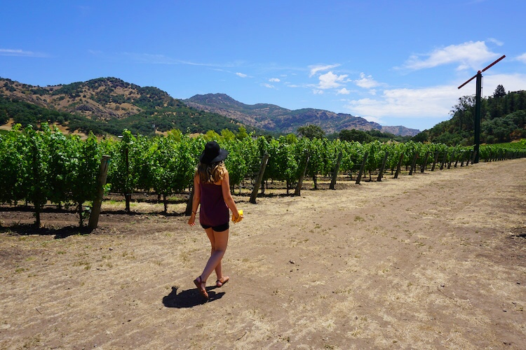 Guide to Wine Tasting in Napa Valley Wine Country_7