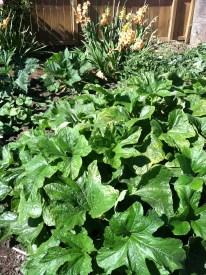 Vegetables in the garden.