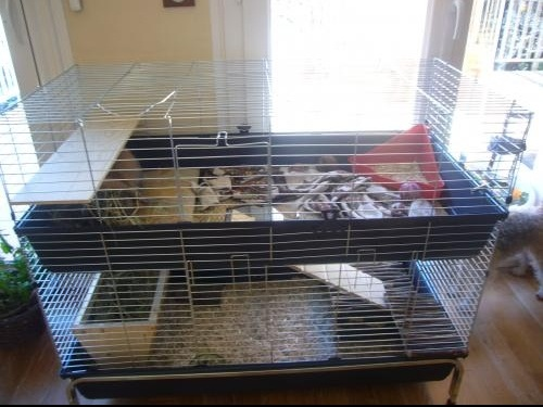 Le Lapin Fiche Hamsters Cochons DInde Lapins