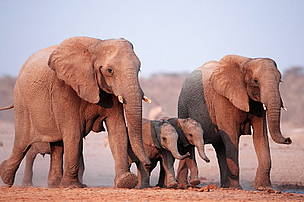 / ©: WWF-Canon / Martin HARVEY
