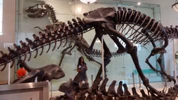 Natural History Museum, New York