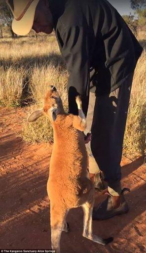 The Kangaroo Sanctuary Alice Springs/Facebook