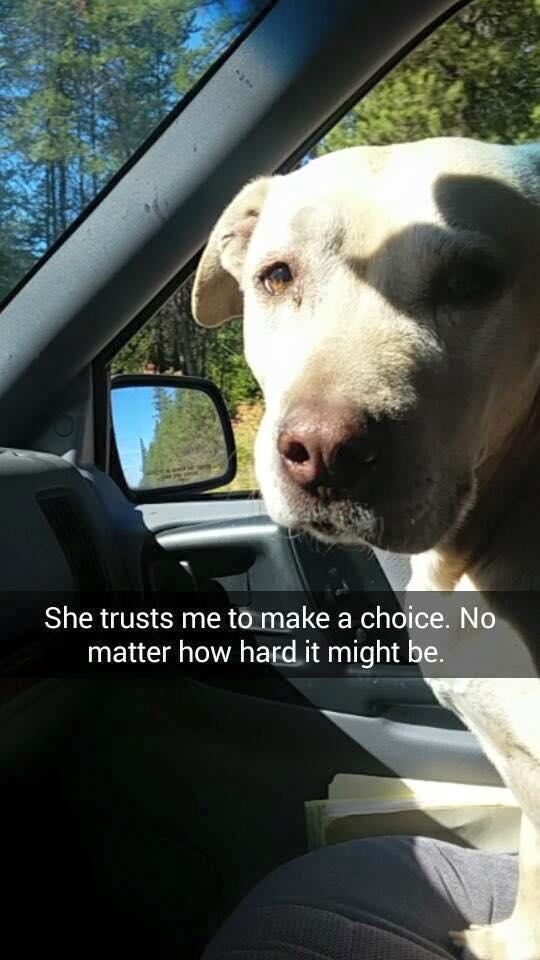 Facebook/Doge