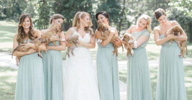 wedding-photos-with-rescue-puppies-696x362