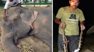 rescued-elephant-reaction-696x362