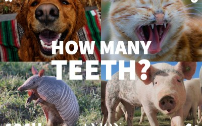 How Many Teeth?