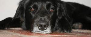 Hond Talentrijk leiderschap www.axisconusltancy.nl