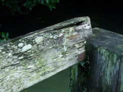 wooden bench with lichen