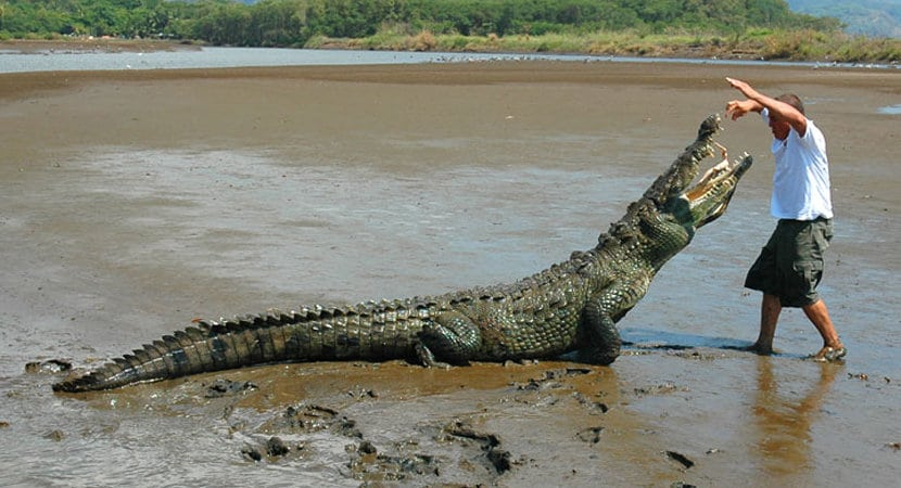 Crocodile Tour Jaco Costa Rica