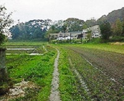 極楽寺→金泉寺への歩き遍路道