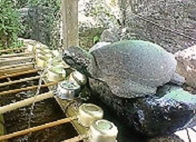 38番札所蹉跎山 補陀洛院 金剛福寺の御手水場。