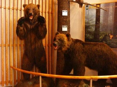層雲峡ビジターセンターにて熊の剥製。
