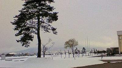 本日、雪景色。