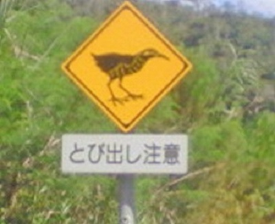 ヤンバルクイナ飛び出し注意