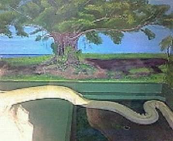 2009/07/06 12:20 ハブ博物公園の大蛇。