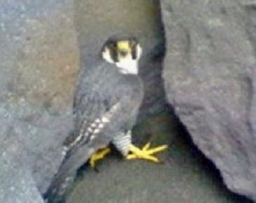 2009/05/28 09:54 逃げ場がなく困り顔の鳥。
